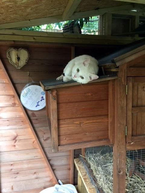 Pet Adventure Playground